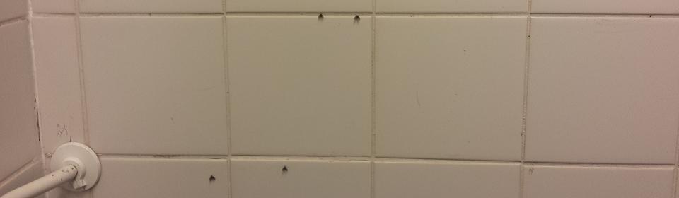 rioolvliegjes op de muur